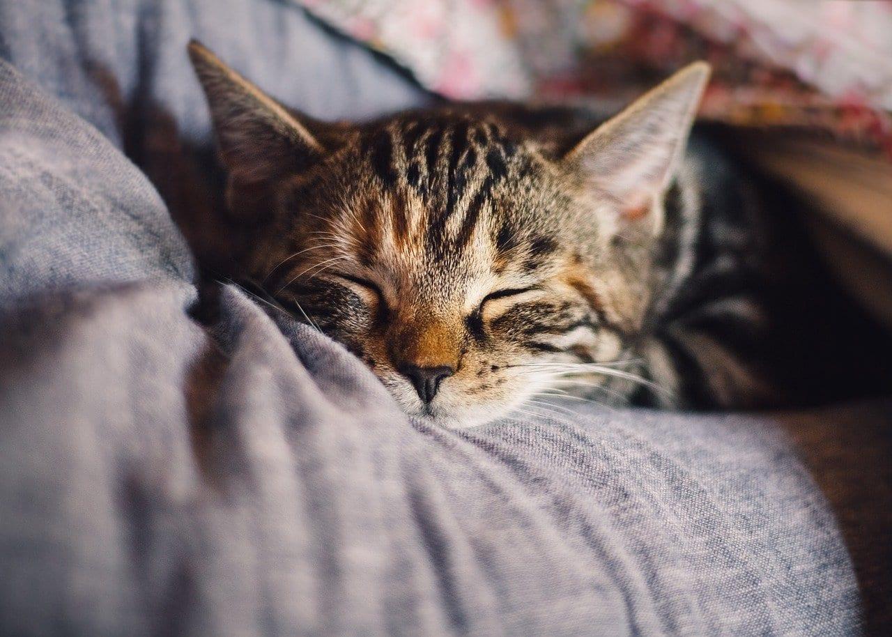 cat sleeping after pet wellness plan visit